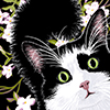 Drawing of a black & white cat with jasmine by Beth Cook